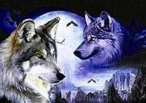 Wolf Moon Wallpapers 3D