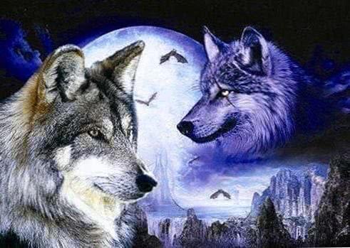 Black And White Wolves Wallpaper 3D