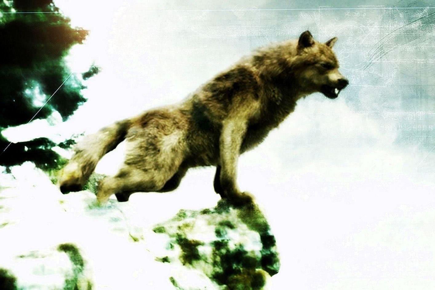 Wallpapers Wide Werewolf
