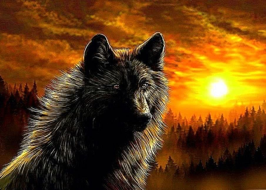 High Resolution Wolf Wallpapers