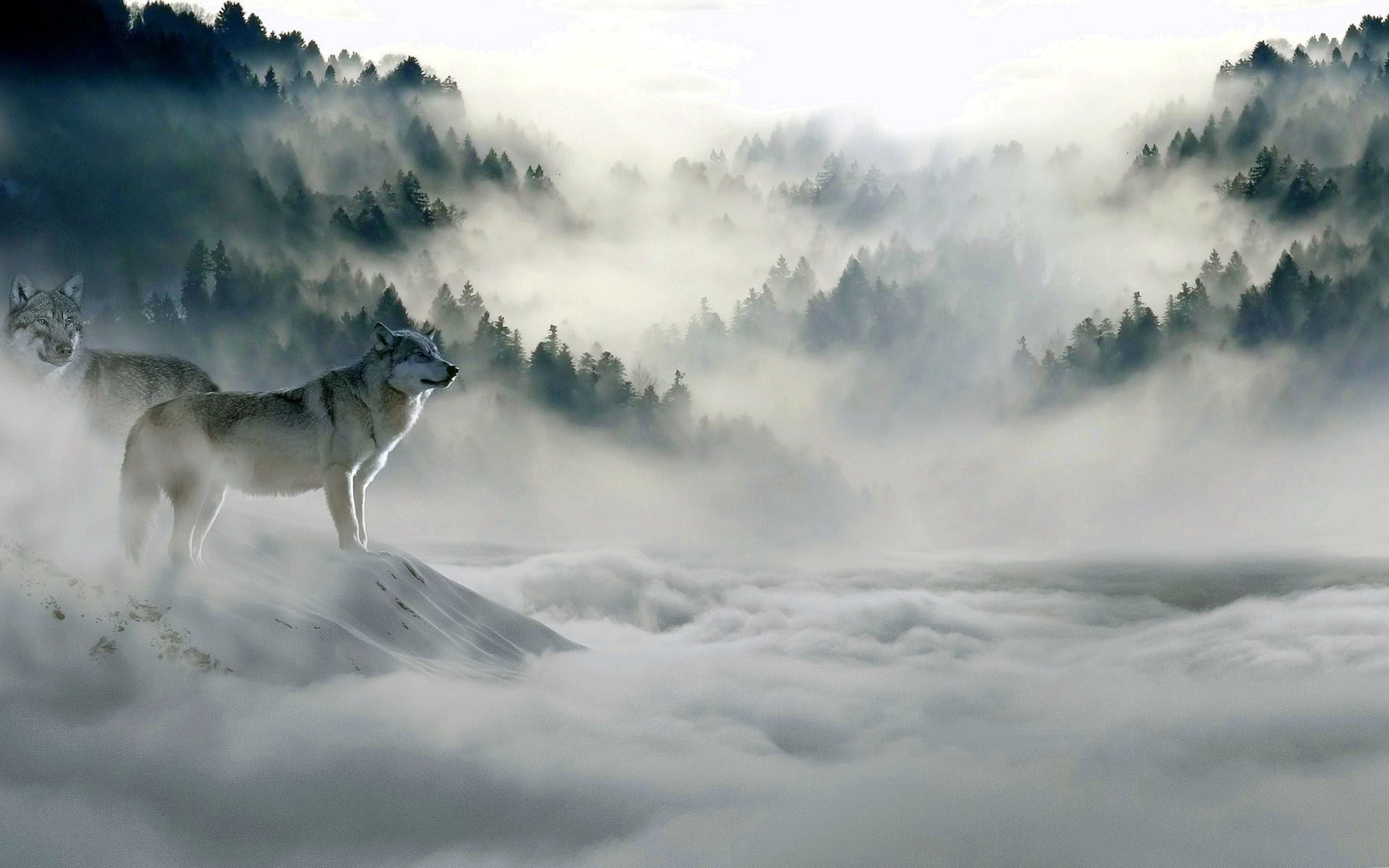 Wolf Wallpapers 4K Phone