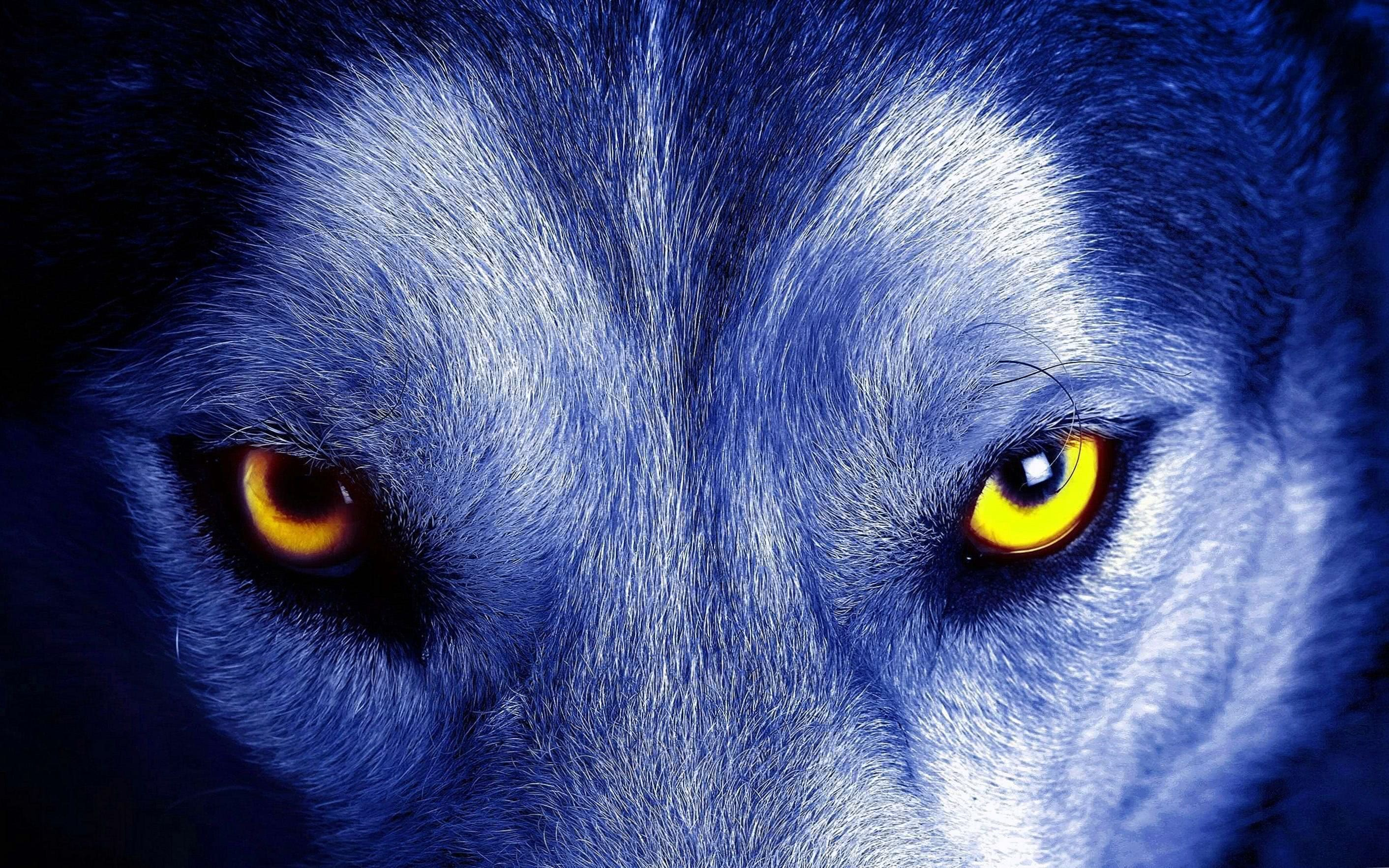 Wolf Without Eyes Wallpapers