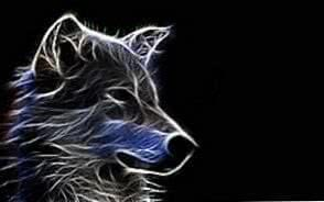3D Wolf HD Wallpapers