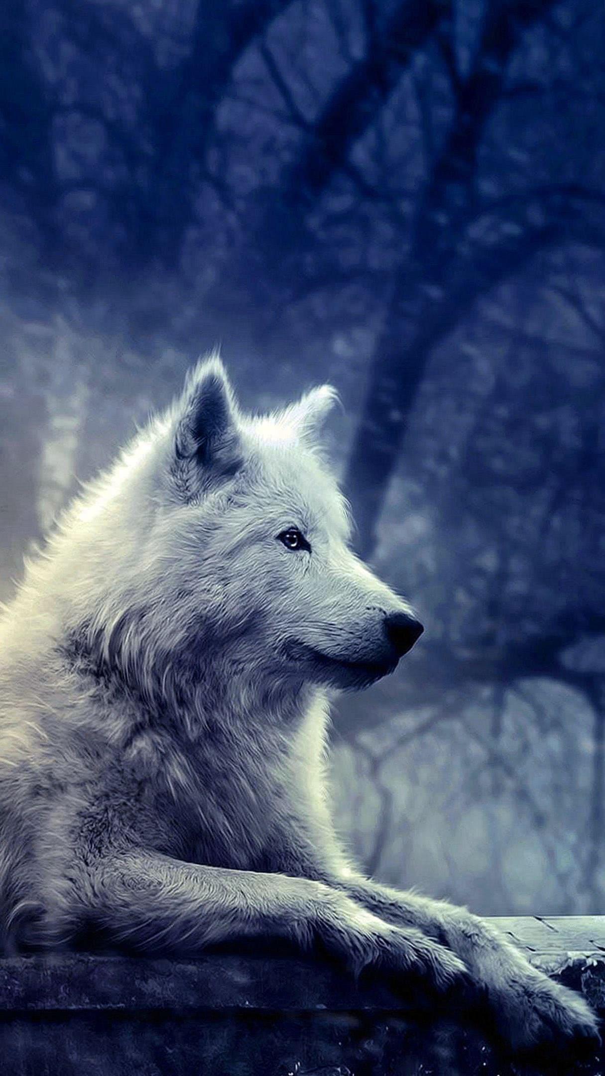 White Wolf Wallpaper 3840×2160