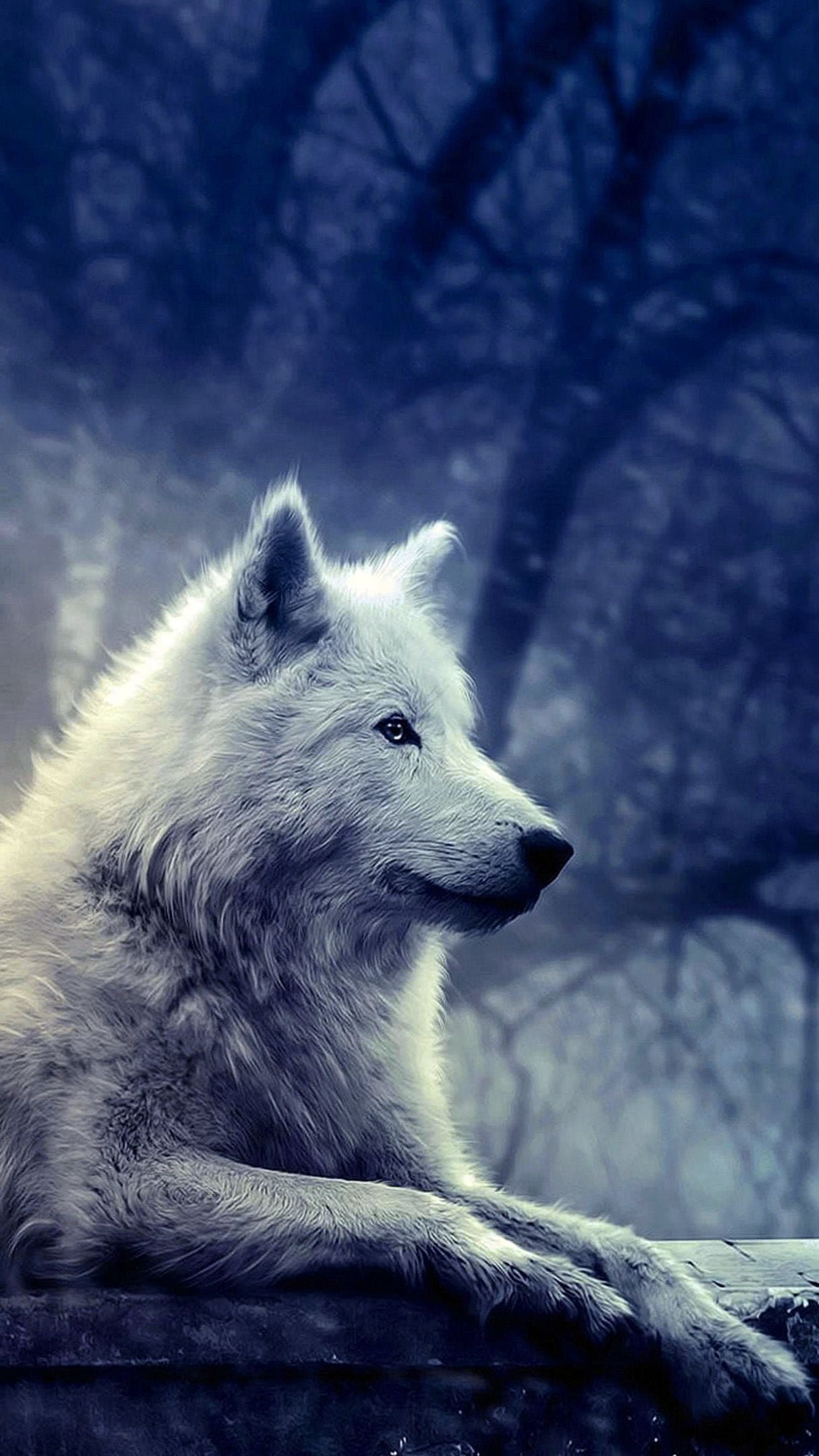 Wallpaper iPhone White Wolf