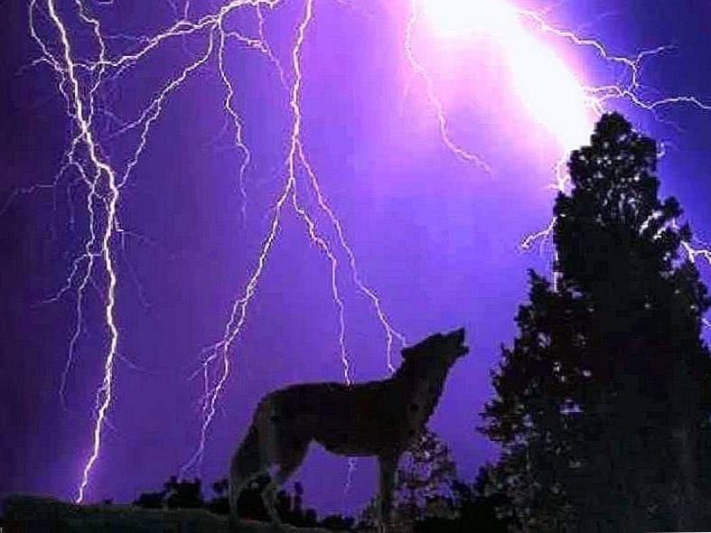 Lightning Wolf Wallpapers