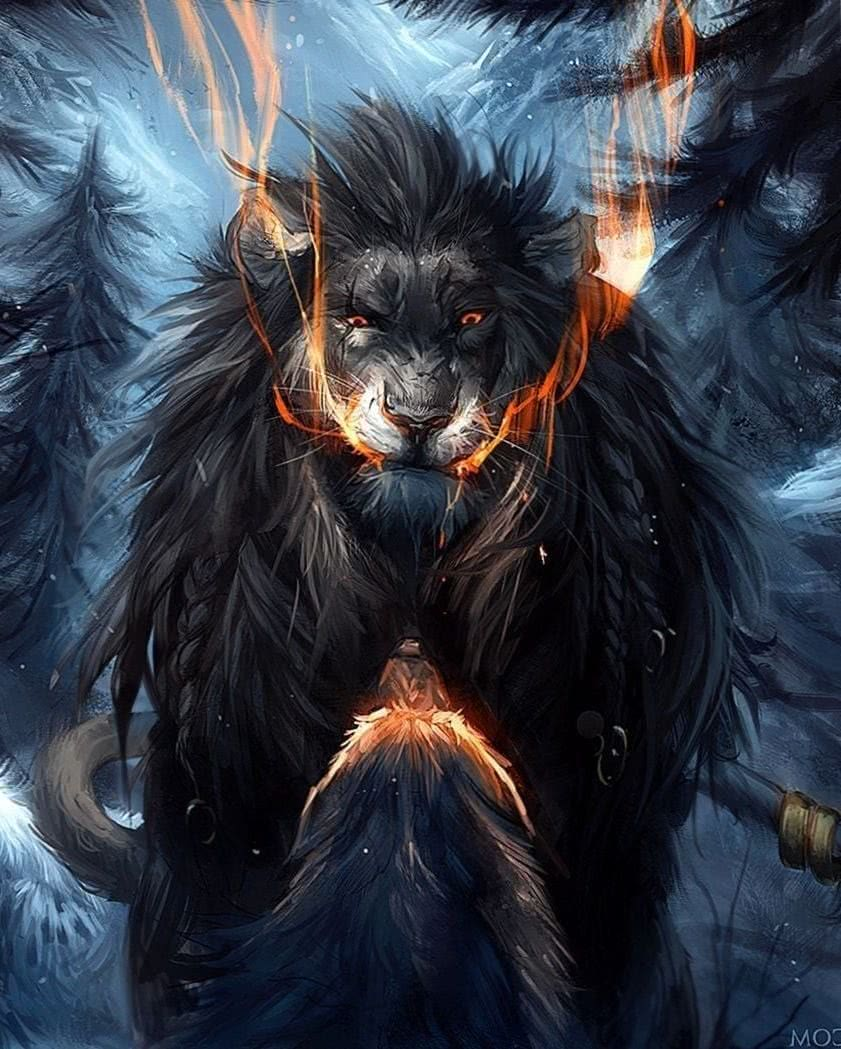 Wolf Lion Wallpapers