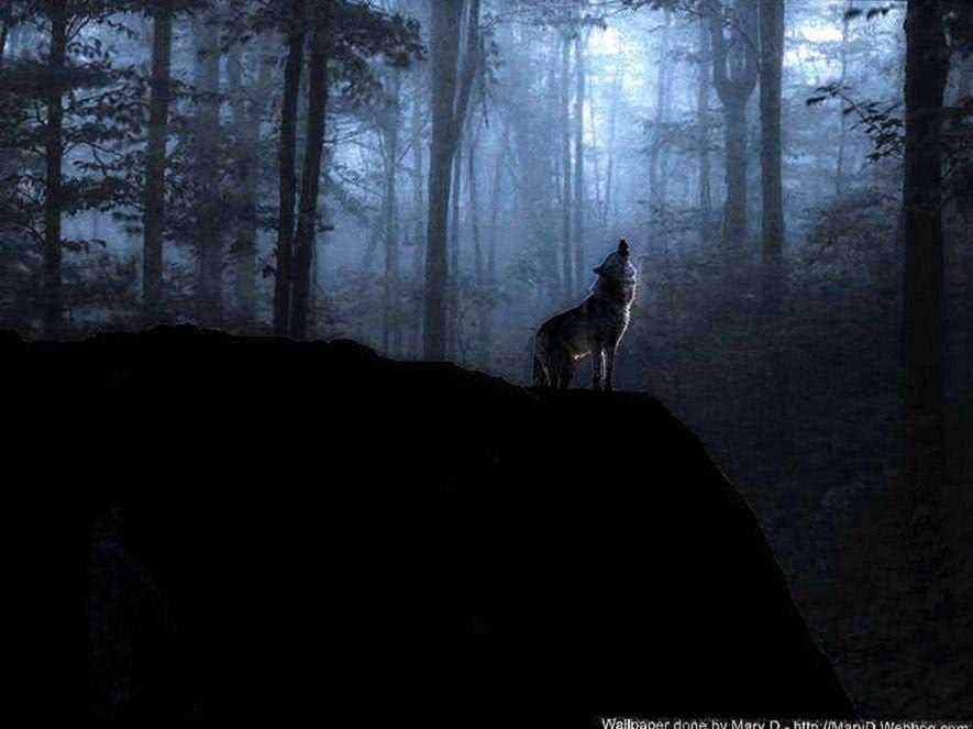 Wolf Wallpaper Lonely