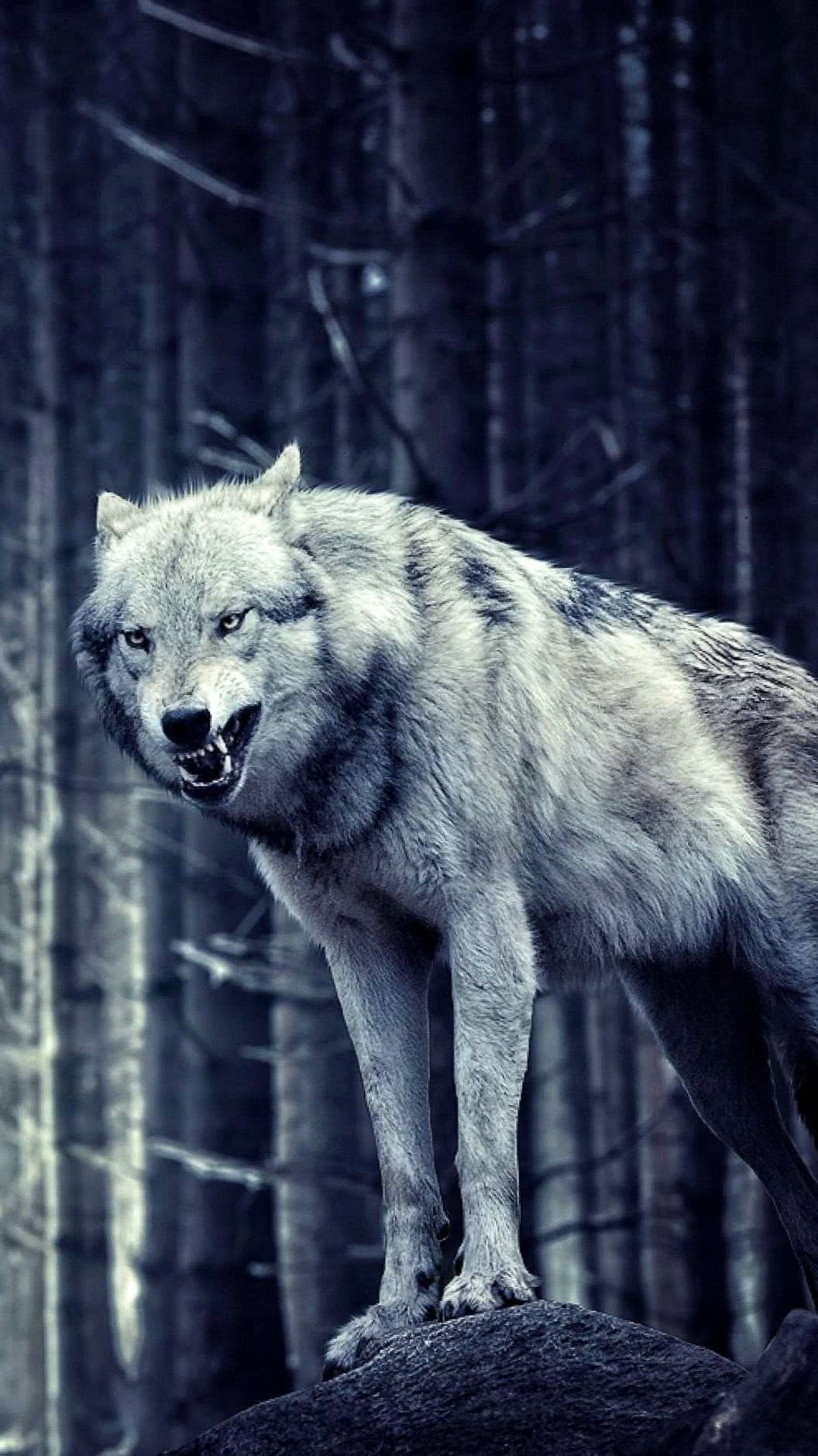 Wallpaper Lone Wolf iPhone
