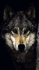 Wallpapers Mobile Lone Wolf