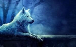 Lone White Wolf Wallpapers