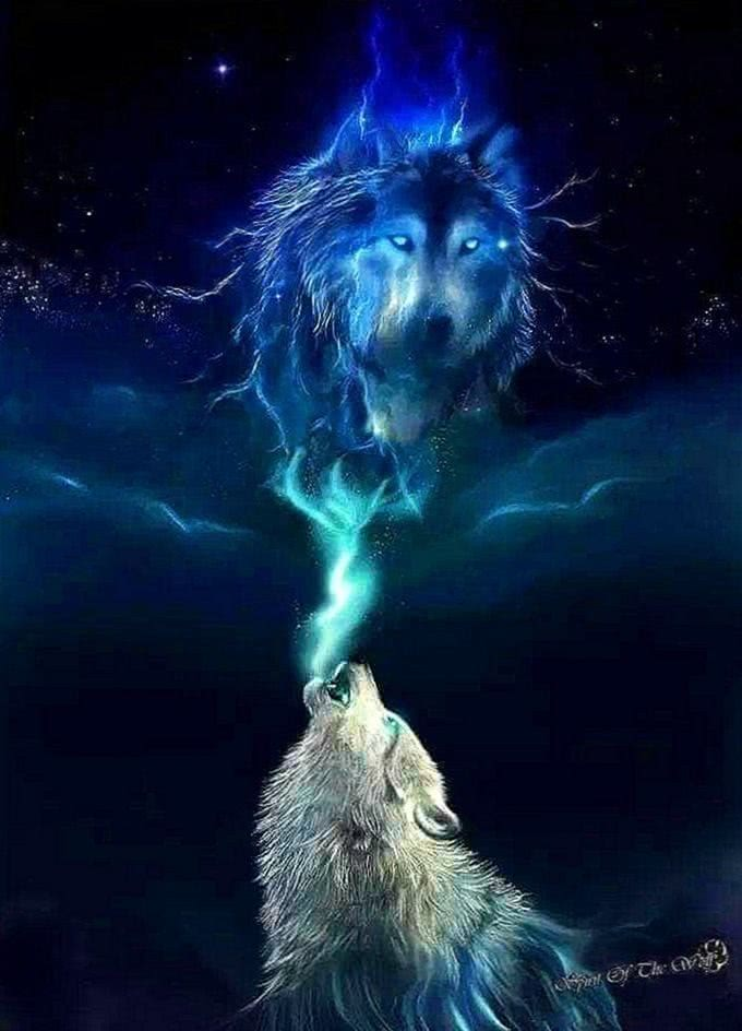 Wolf Wallpapers Great
