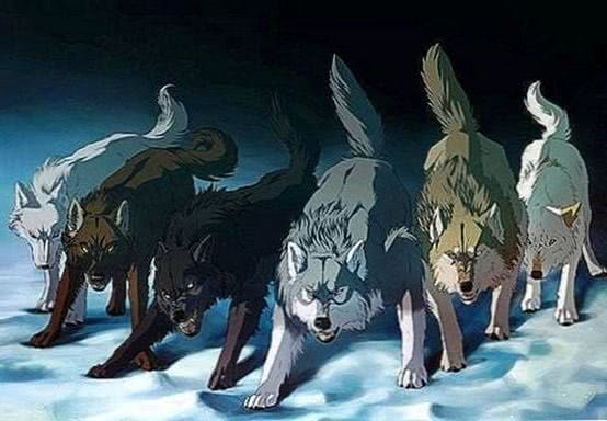 Wolf Group Wallpapers