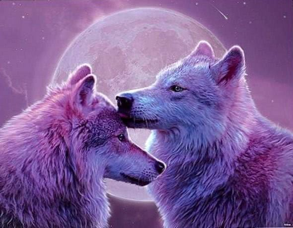 Wolf Wallpapers HTC