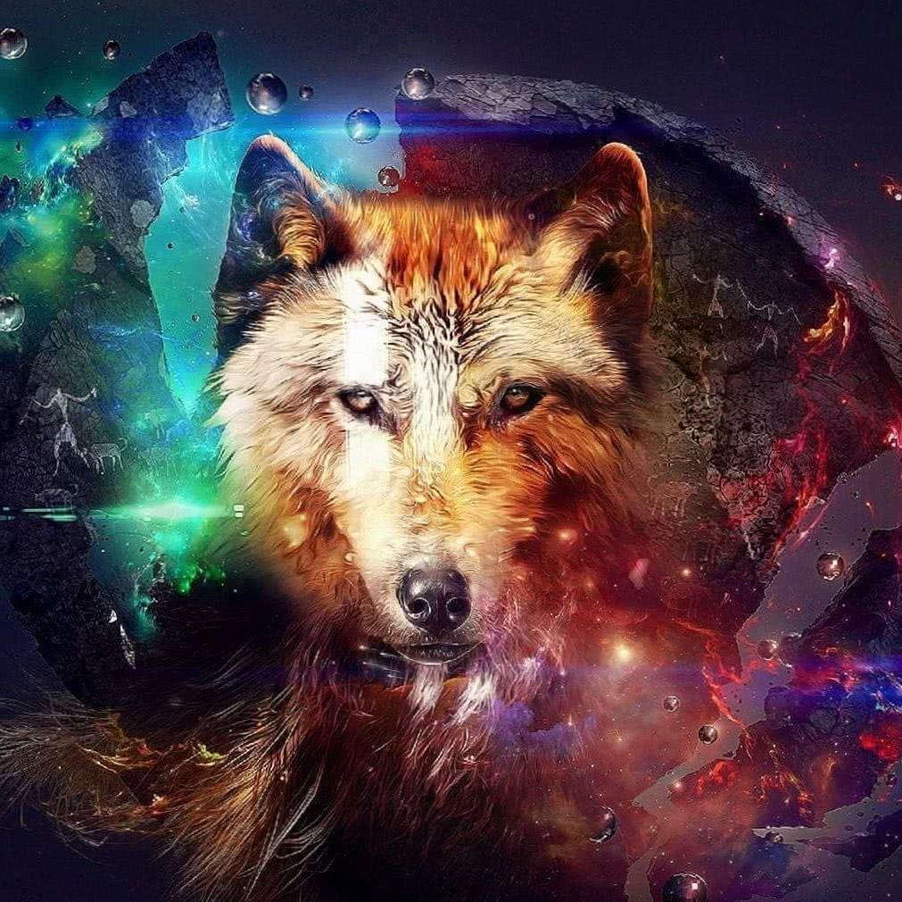 Wolf Wallpapers iPad HD