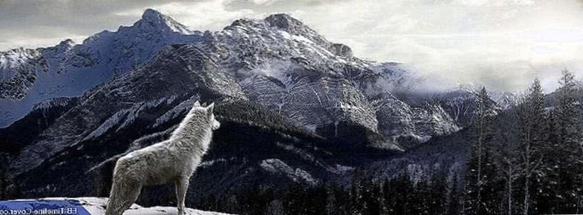 Wolf On Mountain Wallpapers