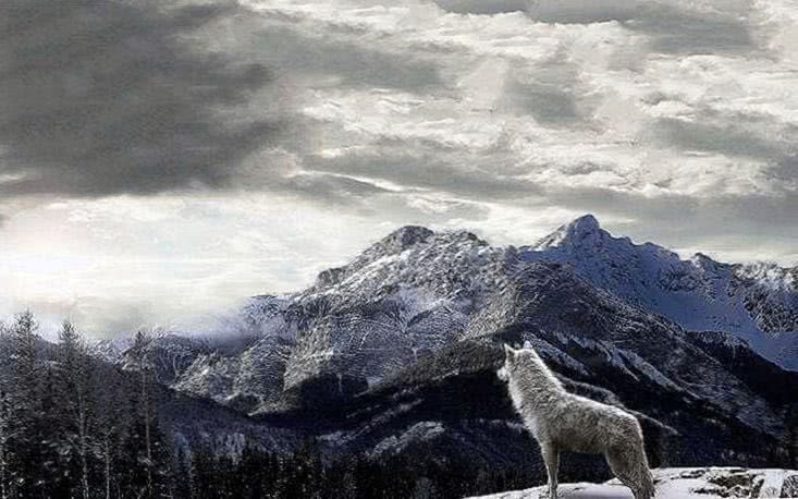 Wolf Mountains Wallpapers
