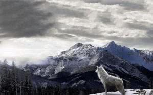 Wolf Landscape HD Wallpapers