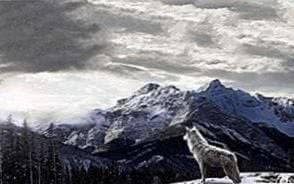 Wallpapers Wolf Landscape