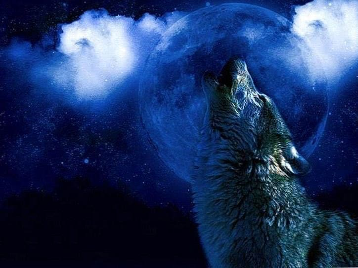 Live Moving Wolf Wallpapers