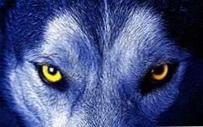 Wolf Wallpapers Yellow Eyes