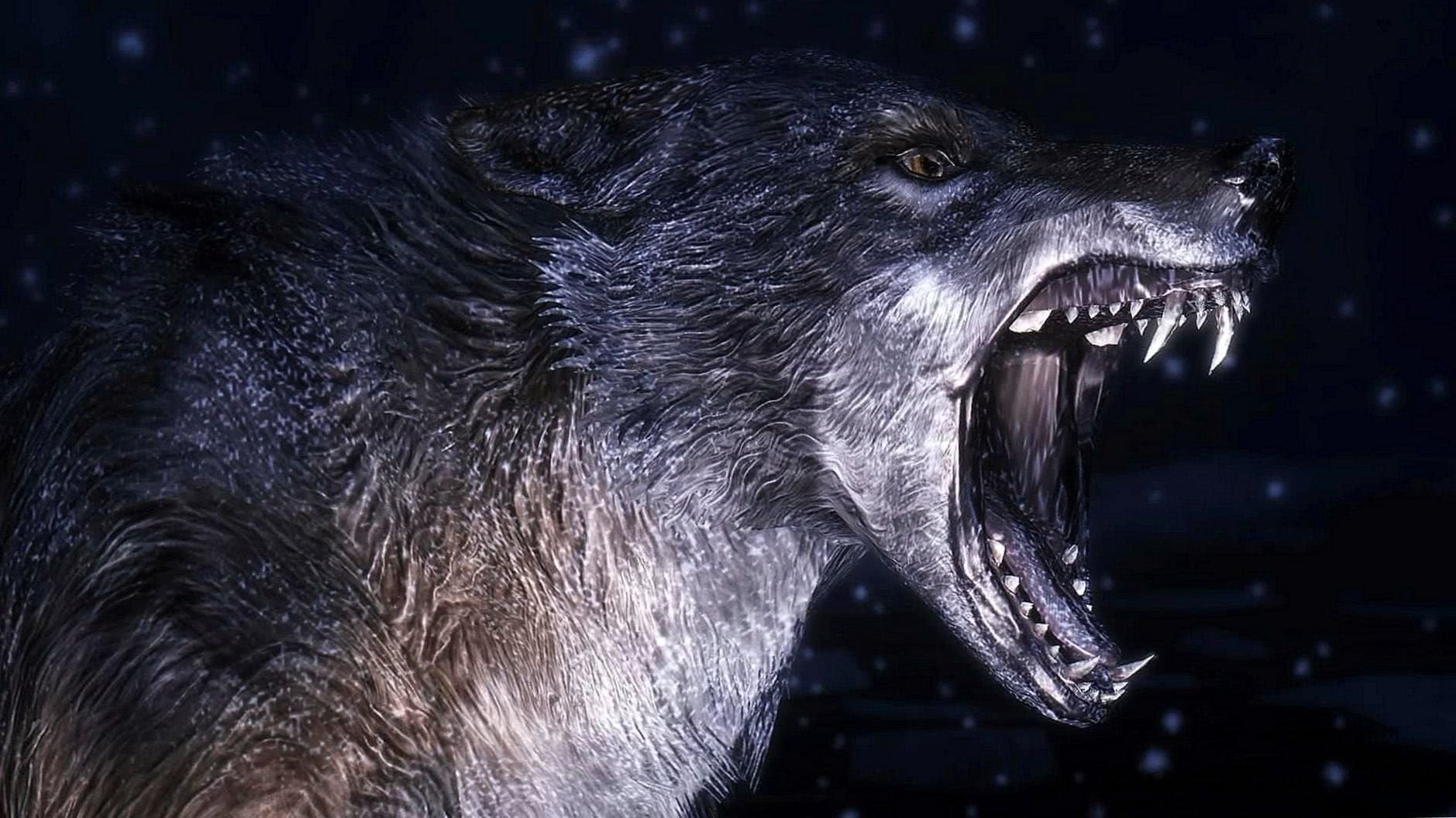 Nice Wolf Wallpapers