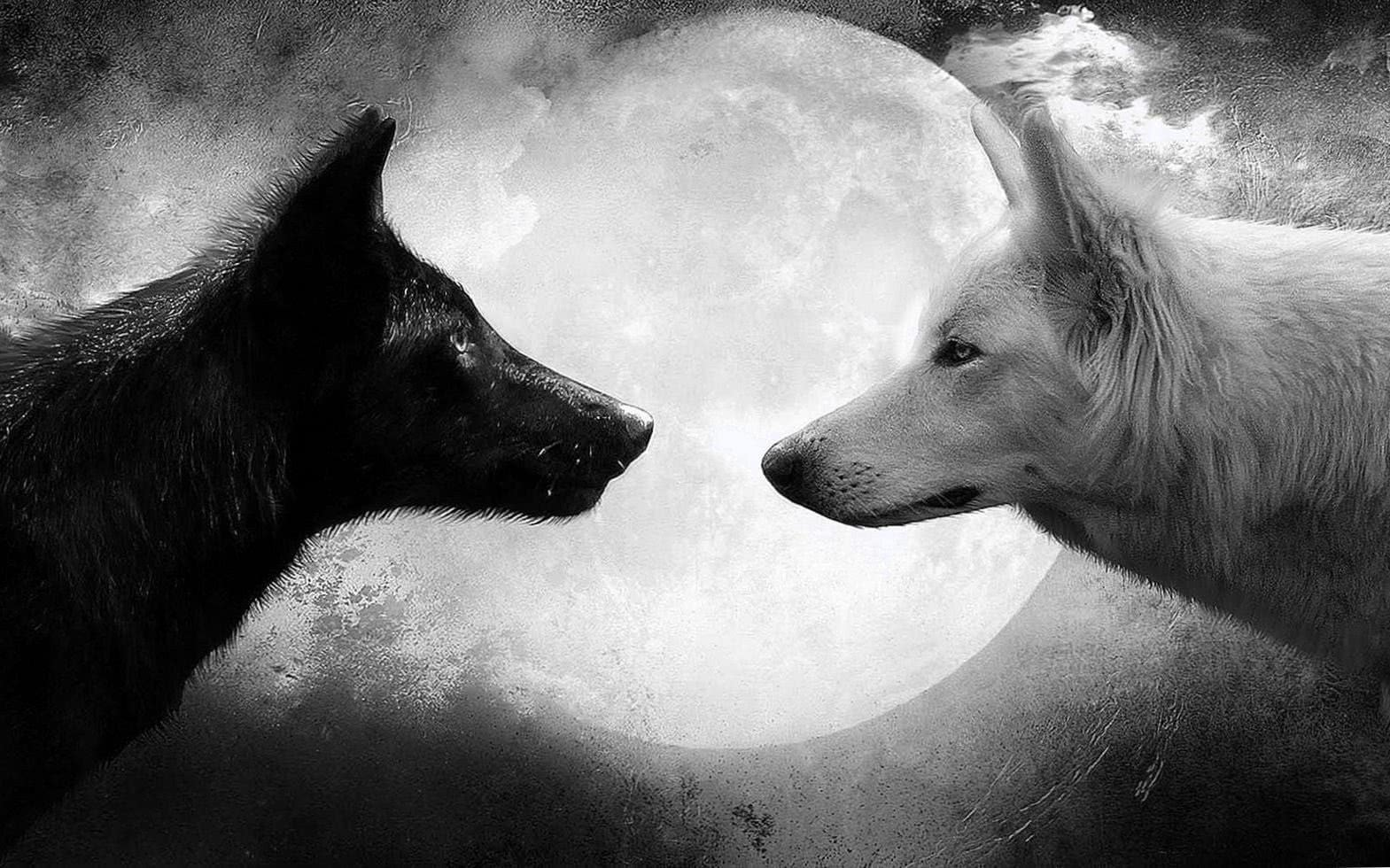 Wolves And Moon Wallpapers