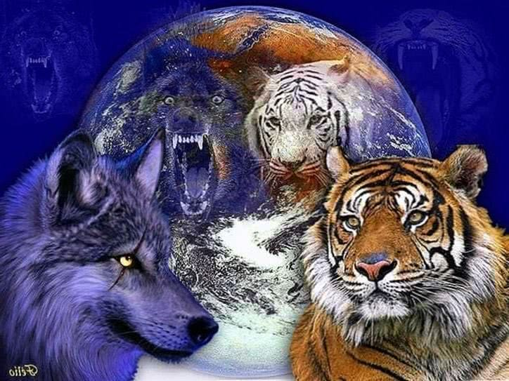 White Tiger And Wolf Wallpaper
