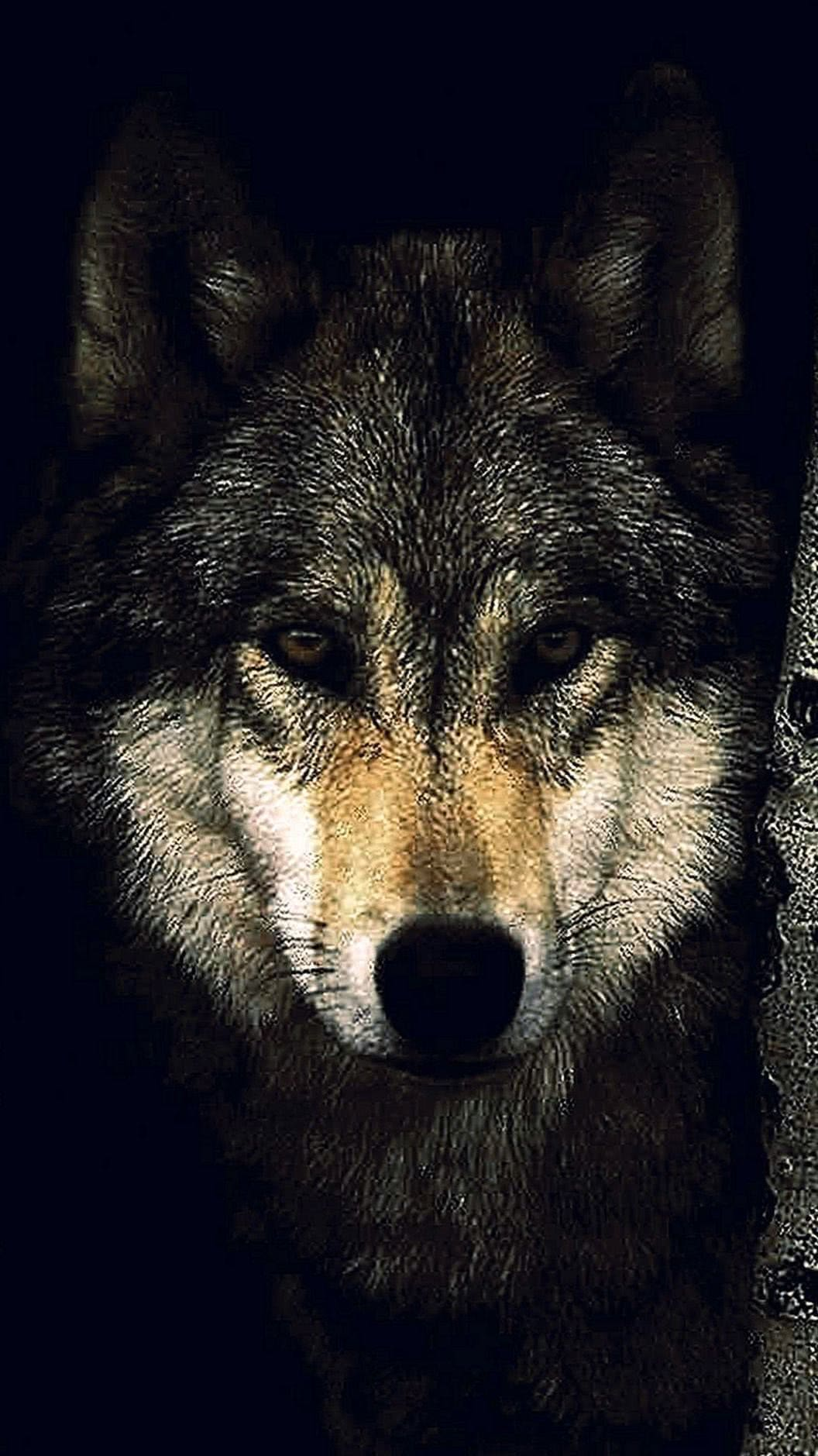 iPhone 6 Plus Wolf Wallpaper