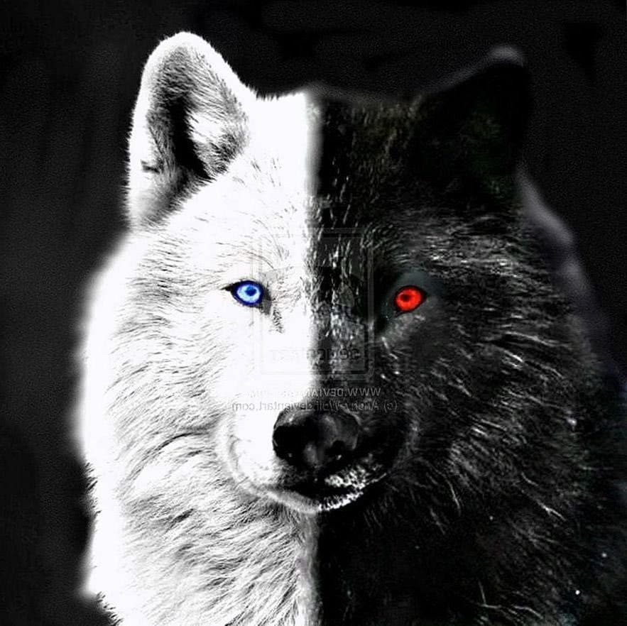 Black Wolves With Blue Eyes Wallpaper