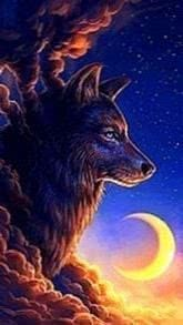 Wallpapers Wolf Night