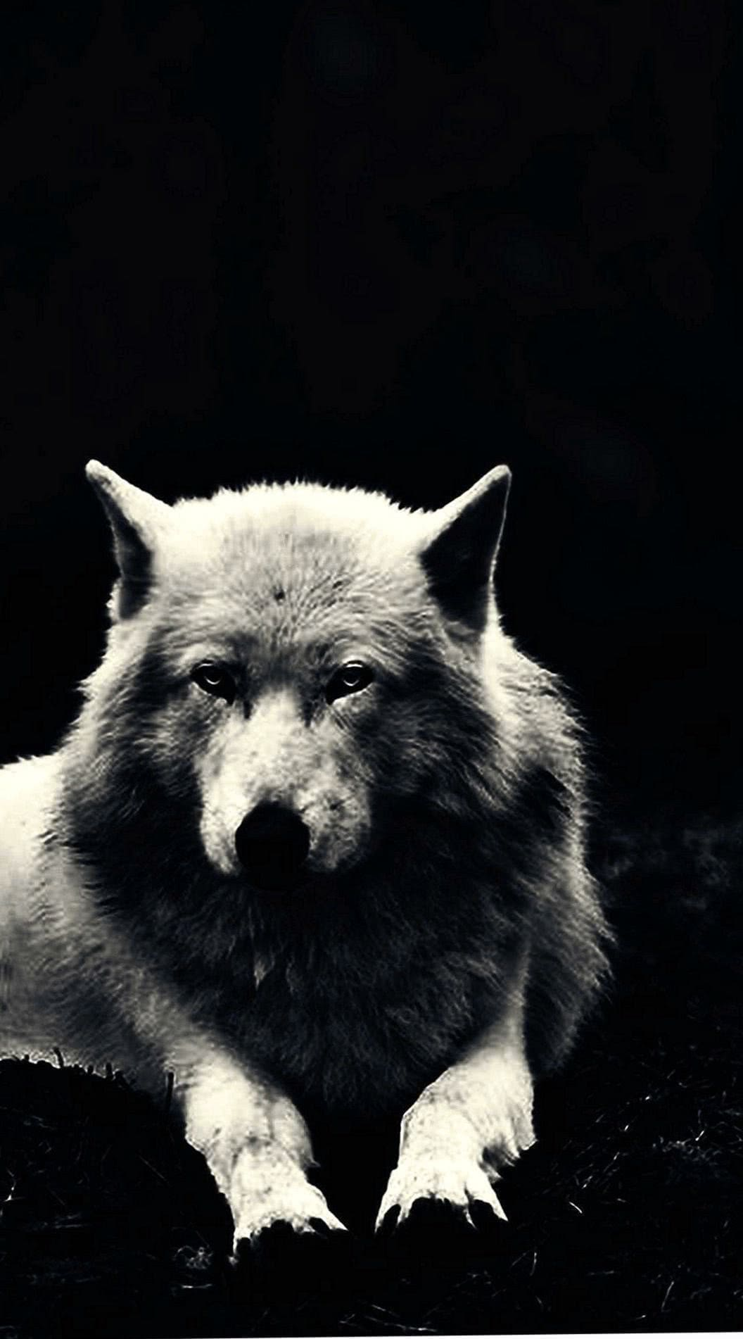 Lone Wolf Smartphone Wallpaper