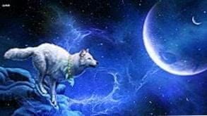 Wallpapers Wolf Space