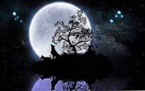 Wolf Night Moon HD Wallpapers