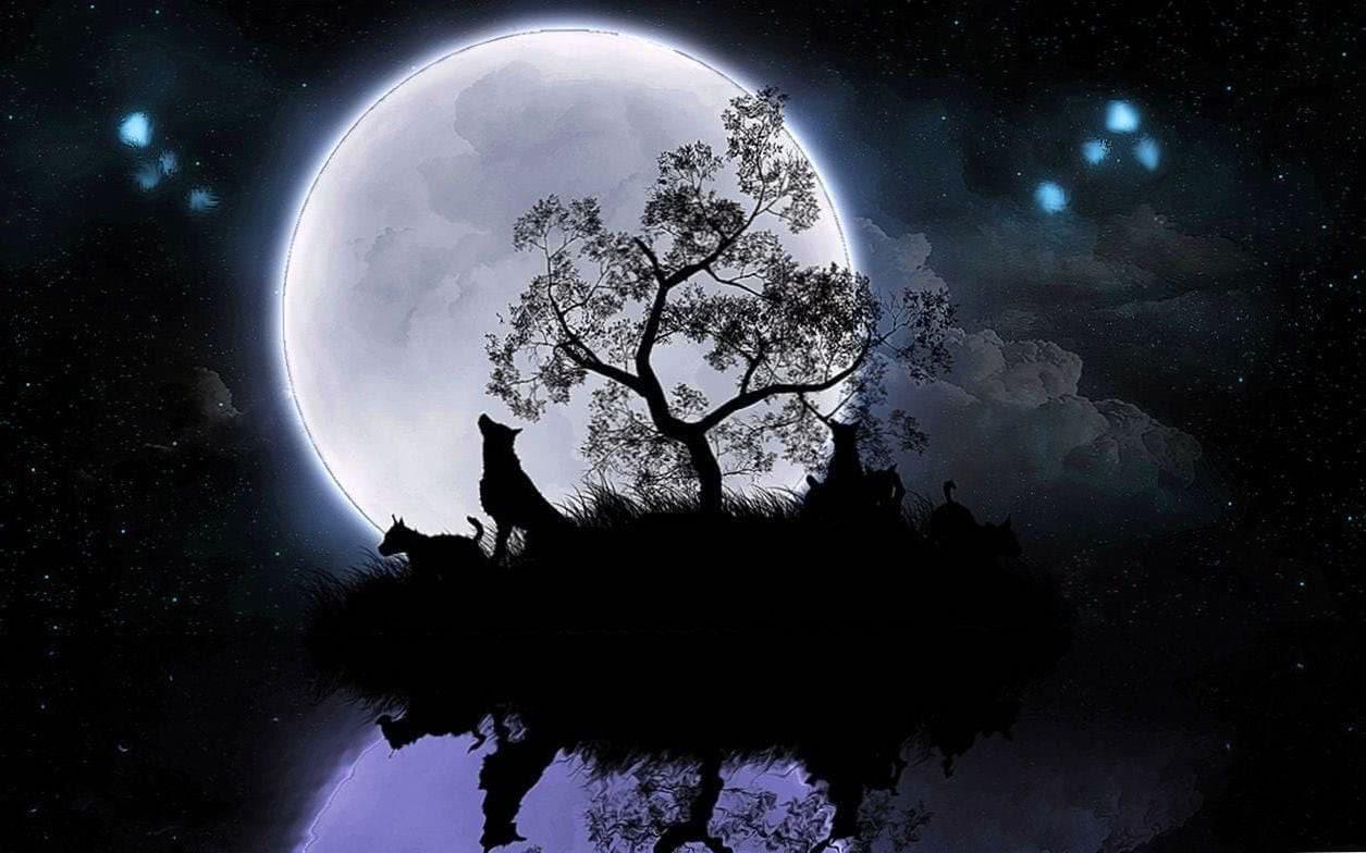 Wolf And The Moon Wallpaper