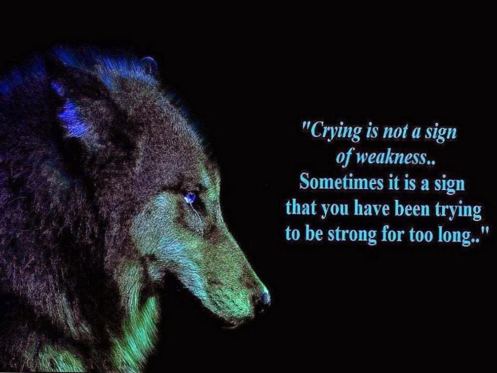 Crying Wolf HD Wallpapers