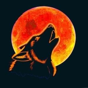 Red Wolf Wallpapers