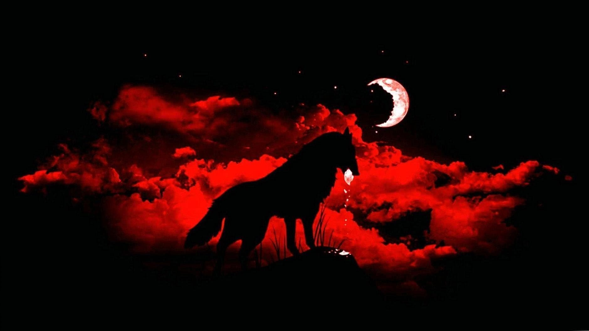 Red Wolf HD Wallpapers