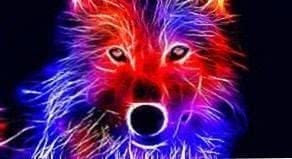 Wallpapers Wolf Red
