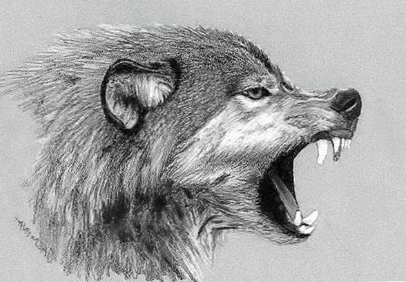 Roaring Wolf Wallpapers