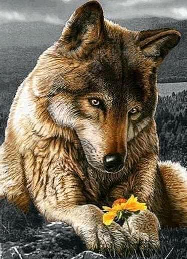 Wolf Wallpaper Flower