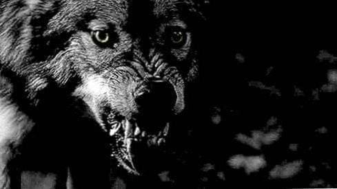 Wolf Teeth Wallpapers