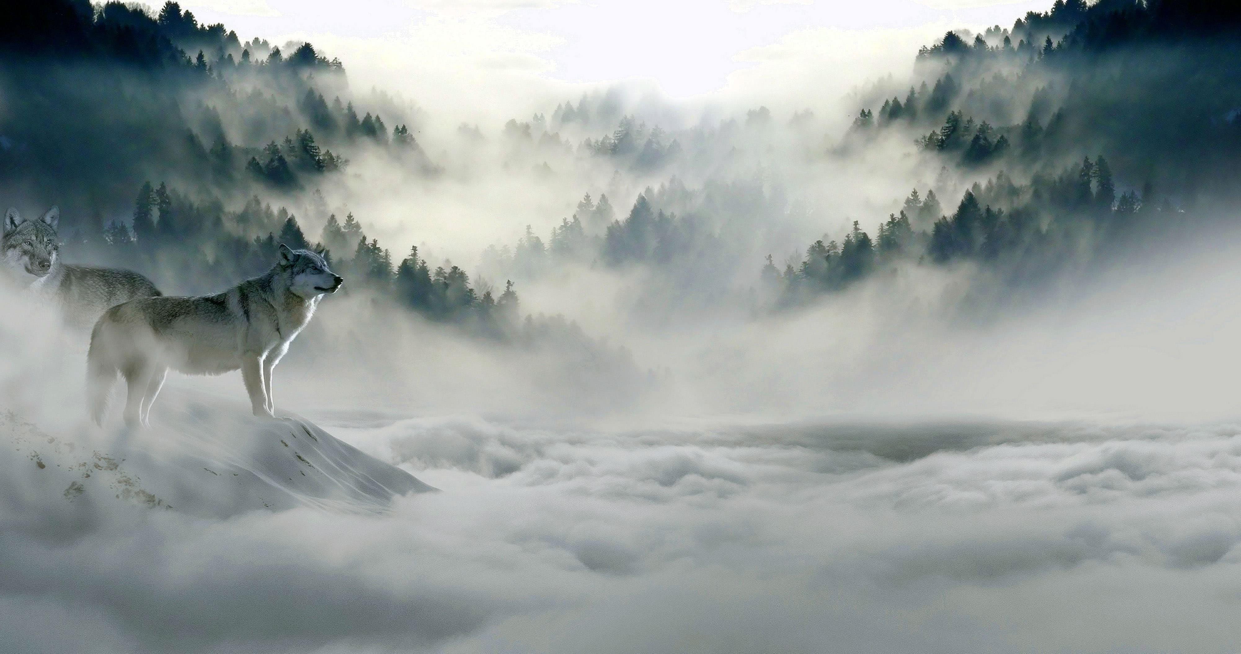 Wolf Snow Desktop Wallpapers