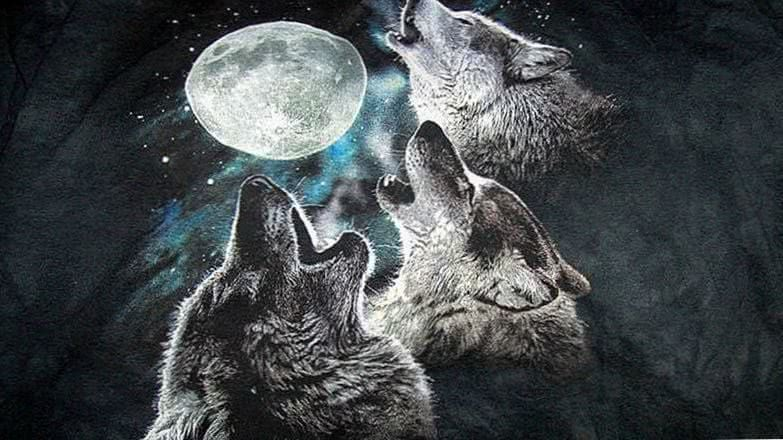 Three Wolf Moon Wallpapers