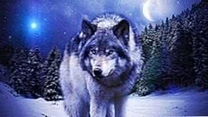 Wolf HD Wallpapers Images