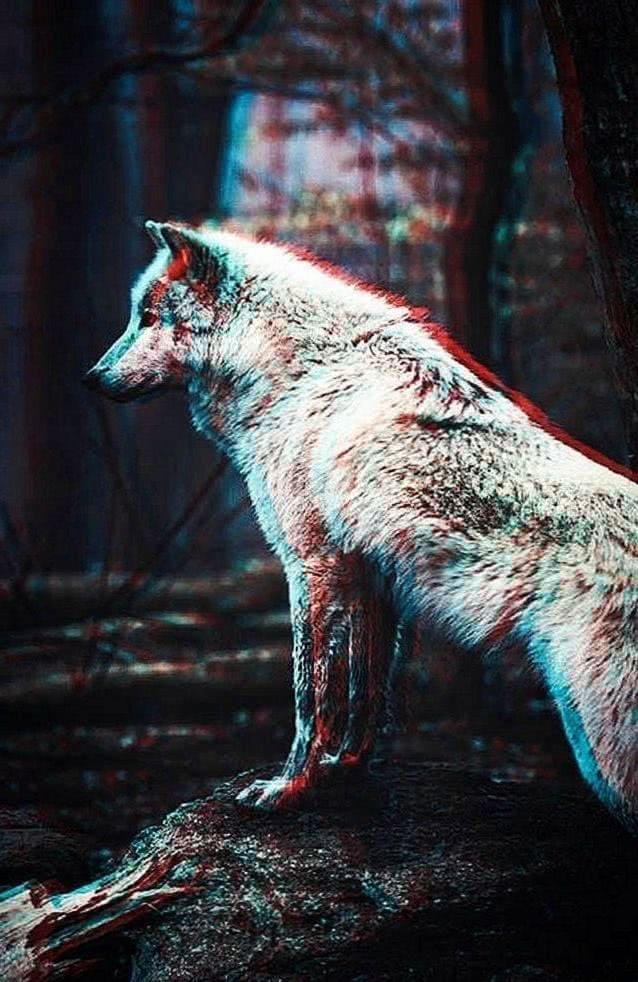Wolf Wallpaper iPhone 8 Plus