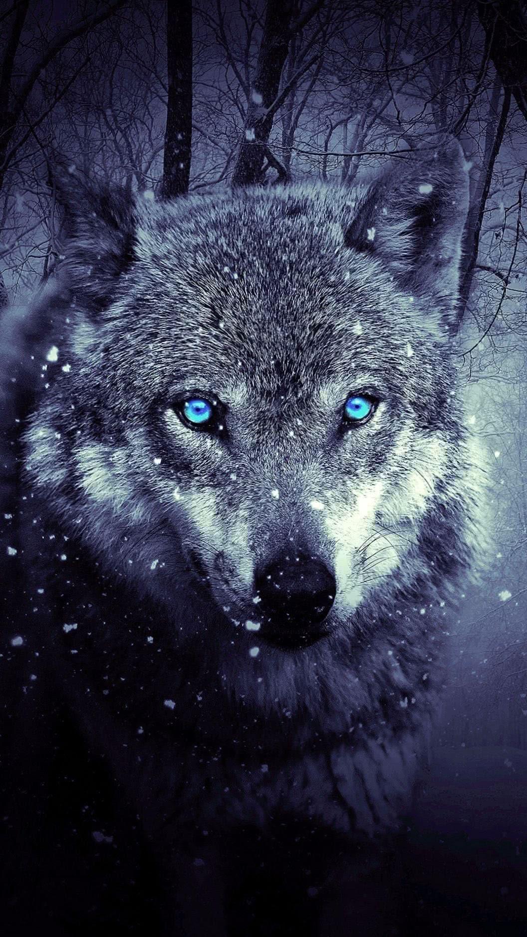 Wallpaper iPhone 6 Plus HD Wolf