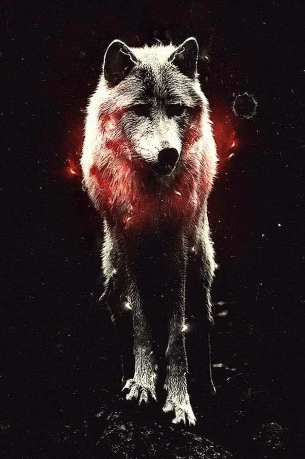 Red Wolf iPhone Wallpaper