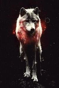 Cool Wolf iPhone Wallpapers
