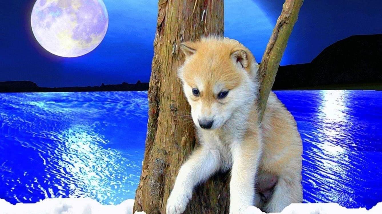 wallpaper proslut hd wolf wallpapers 16 wolf wallpapers.pro